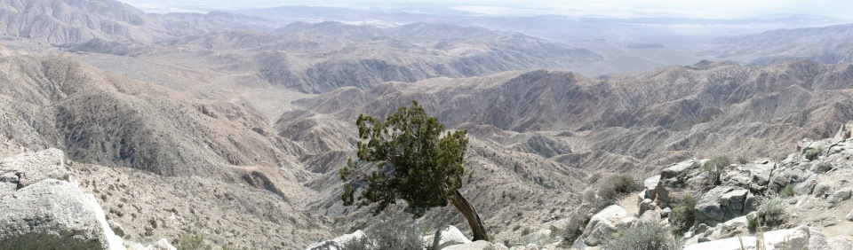 Juniper Tree Overlooking the Coachella Valley, California
