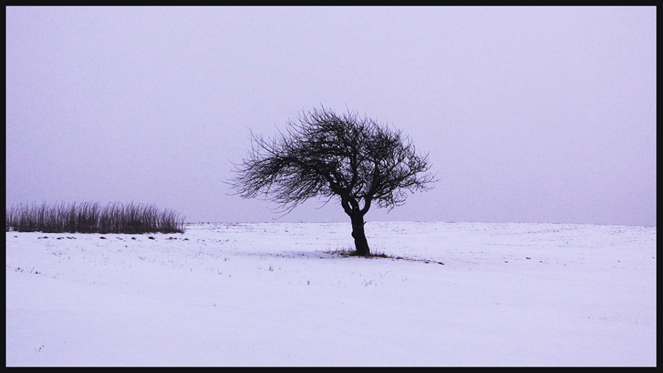 The Starkness of Winter